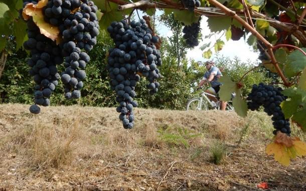 Video Piemonte - Tour do Barolo e Tartufo