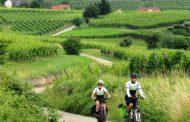Video Rota dos Vinhos na Alsácia