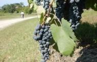 Piemonte na Rota do Vinho e Gastronomia